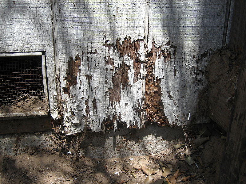 Termite Bonds | Pest Cartel | Central Florida