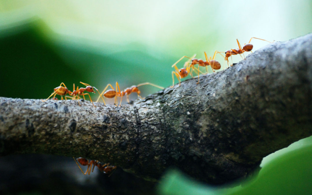 The Pest Cartel: Now Offering Pest Control Services in Tampa